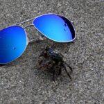 Gafas polarizadas maui jim