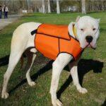 Chalecos para perros de caza