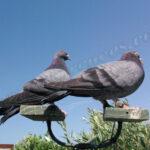 Reclamos de paloma
